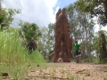 50-Jahre-alter-Termitenhügel-im-Litchfield-National-Park